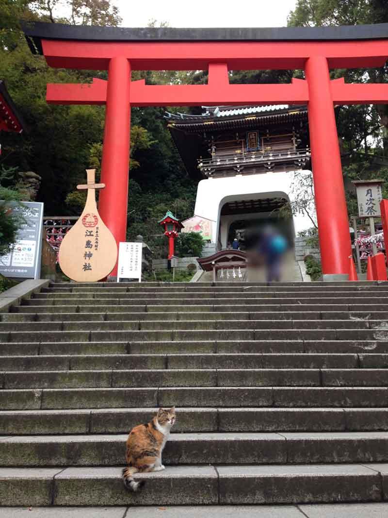 江ノ島は猫がたくさん