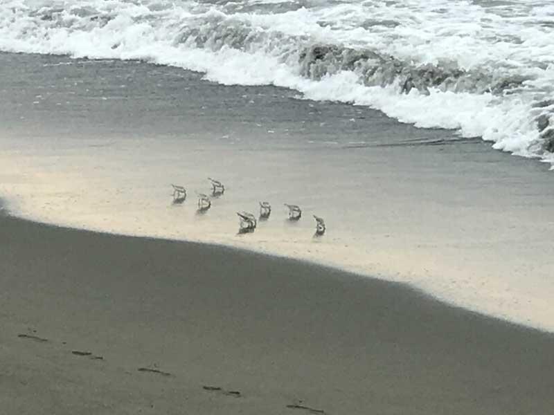 かわいい小さな鳥が歩いています