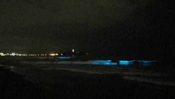 【夜光虫再び!】10月2日湘南辻堂海岸に夜光虫が大量出現!見逃した人は次はいつ見られるの?