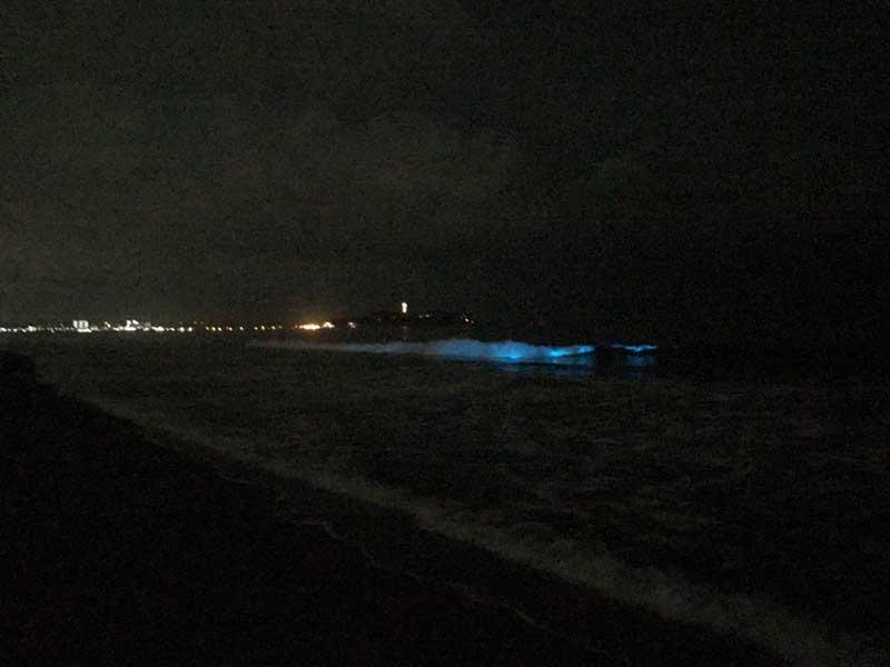 波と夜光虫が迫ってきた!