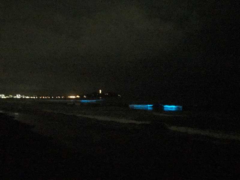 青く鮮明な夜光虫の光