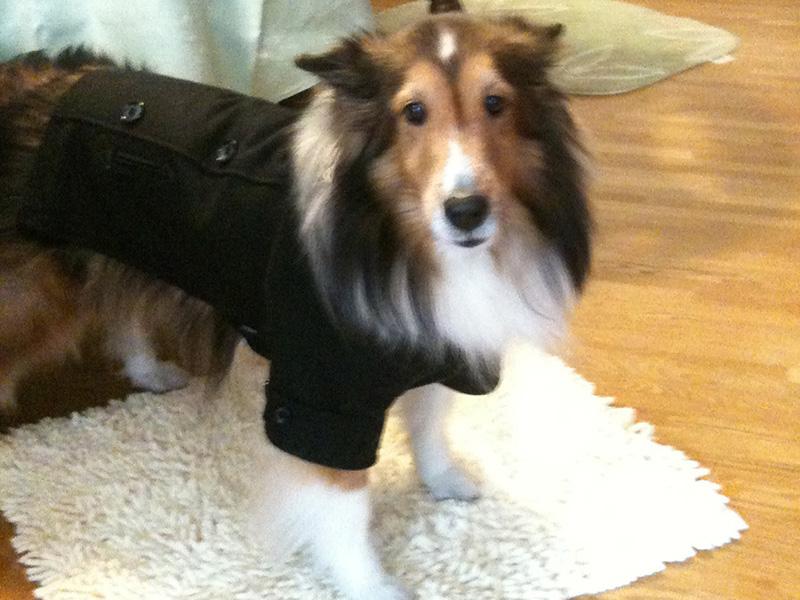 我が家の長寿犬に学ぶ健康と長生きの秘訣