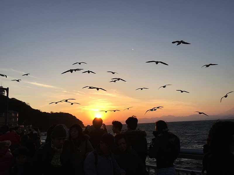 江ノ島食べ歩き注意!恐怖!【とび・トンビ・鳶】は背後から襲ってきます!