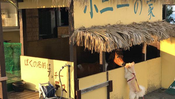 【鵠沼海岸ポニーの家】本物の仔馬に会える海の家があるってホント?犬も子供も大喜び!