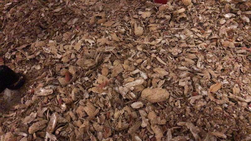 足元に大量のピーナッツの殻が!