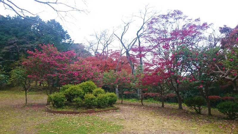 源氏山公園の広場
