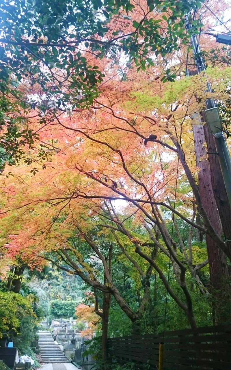 リスも喜ぶ綺麗な見頃の紅葉
