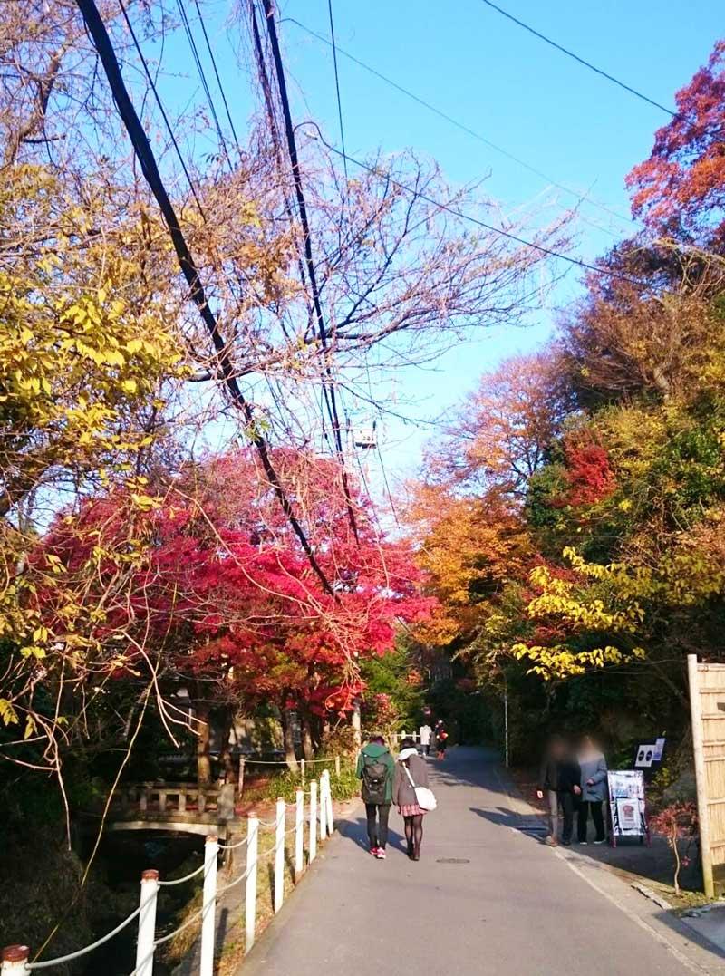 紅葉の見頃を迎える鎌倉の街並み