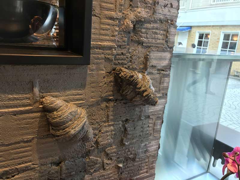貝の化石かと思ったら