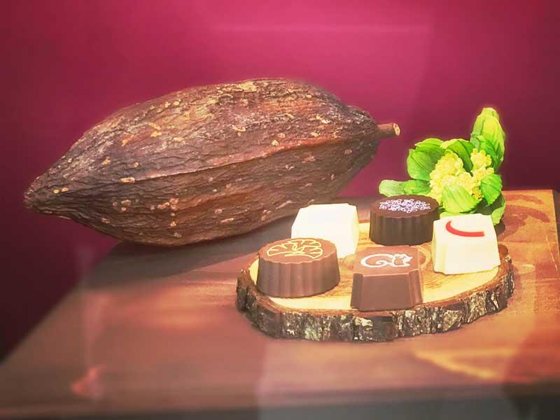 カカオの実と展示されている紅谷チョコレート