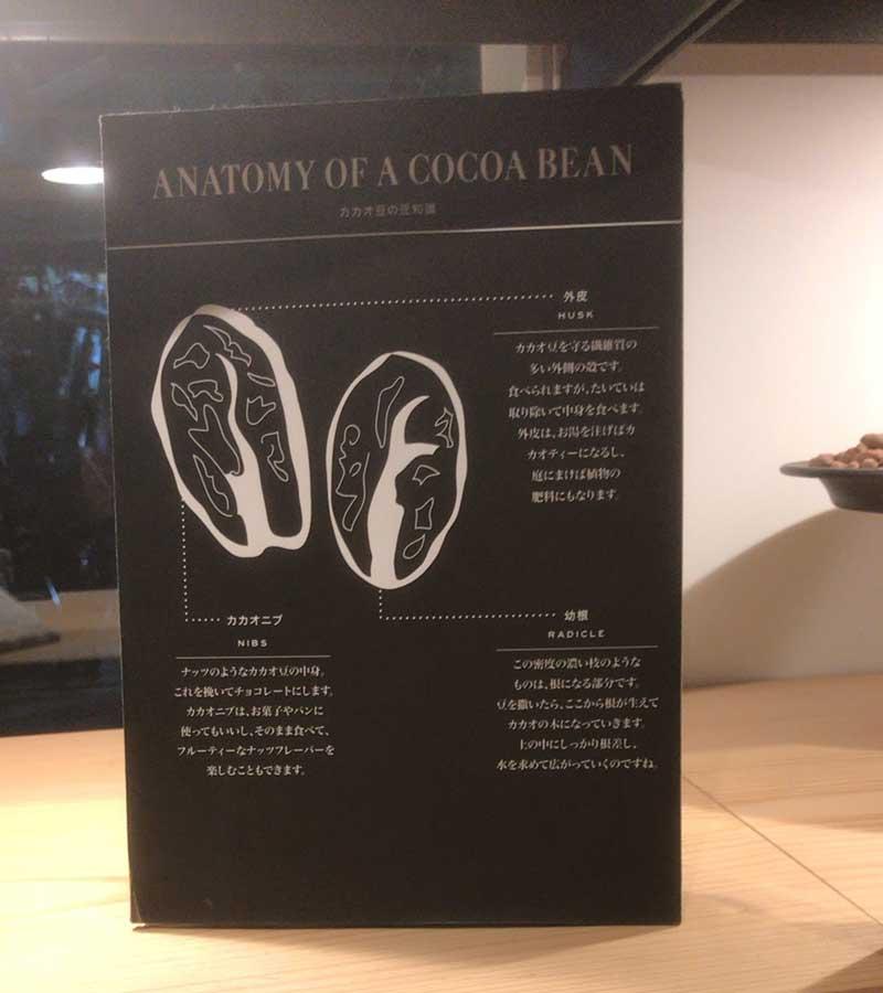 カカオ豆の断面図