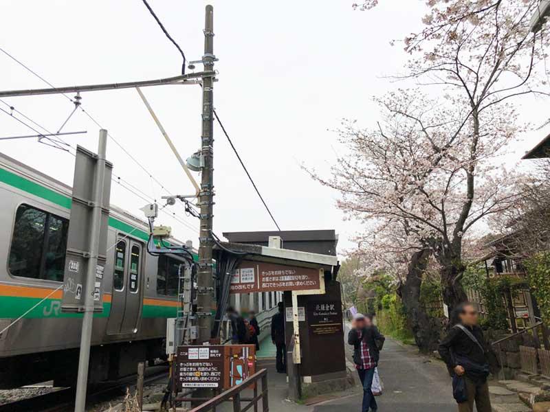 北鎌倉駅前のさくらの様子