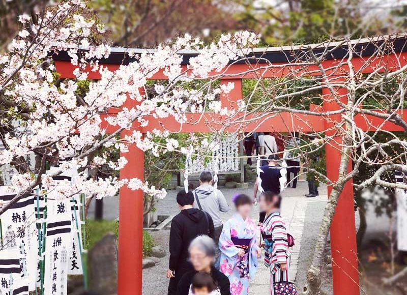 【2018鎌倉さくら情報】3月末〜4月上旬の開花状況レポ!今週末が満開でおすすめ!