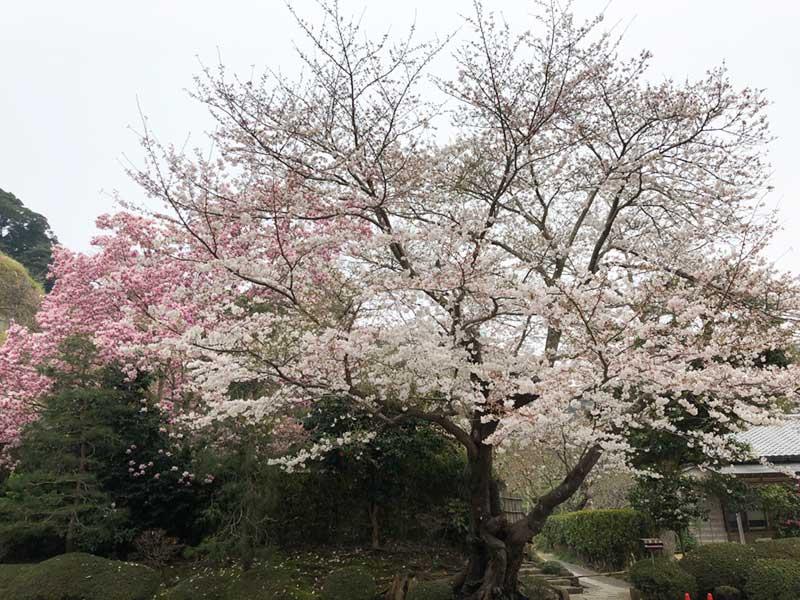 白とピンク色の組み合わせ
