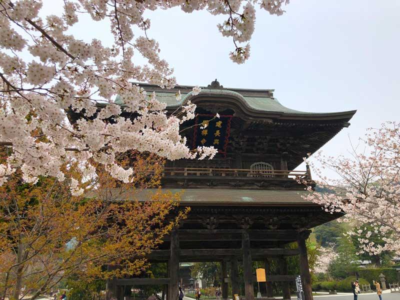 巨大な三門と桜