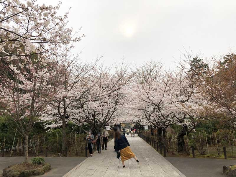 1番の写真スポットは入口の桜のアーチ