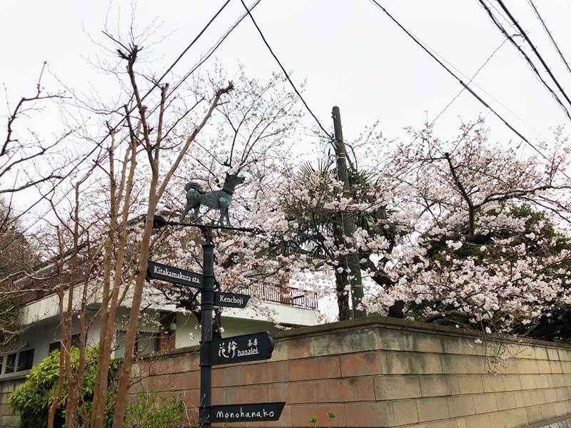 街角も桜で溢れています