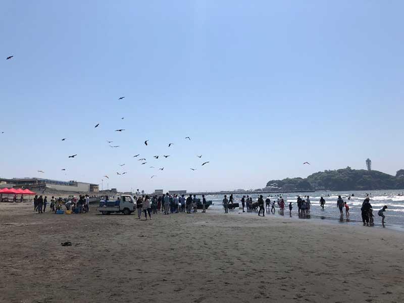 地引網イベントの上空に集まるとんびの群れ