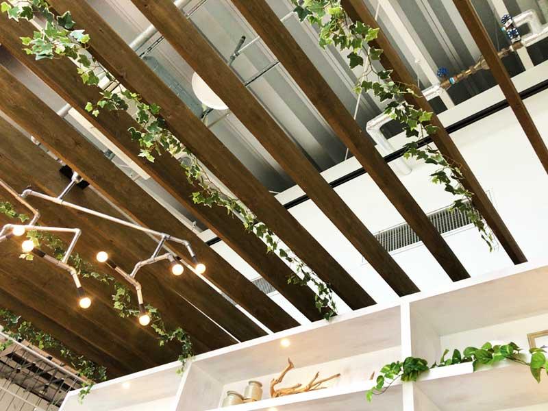 天井も高くて緑もある