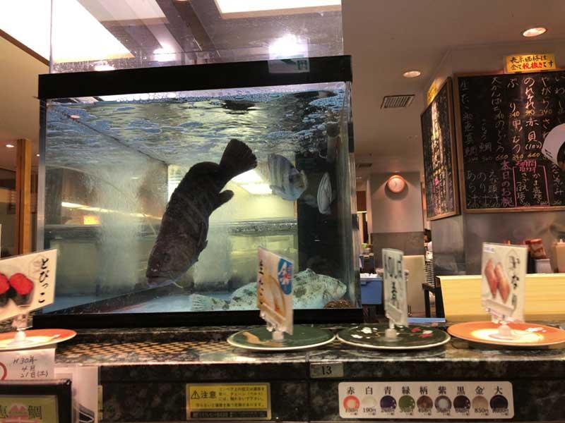 いけすの鮮魚