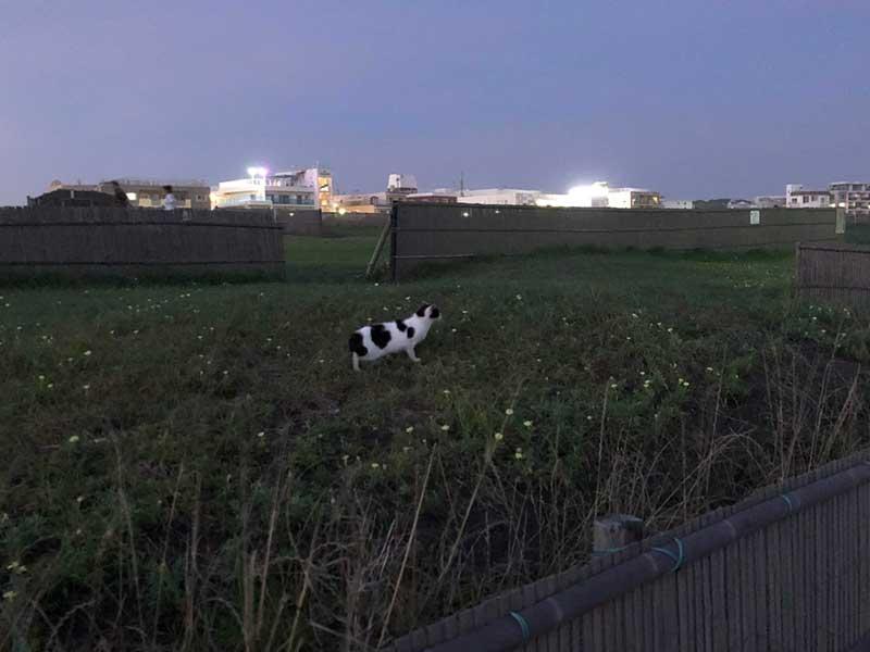 ネコもみとれる夕陽だニャ