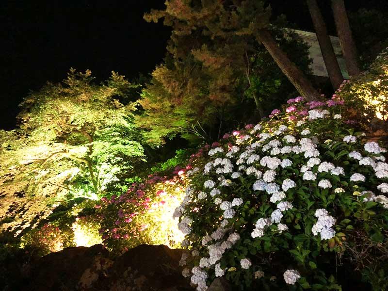 まわりの木々もライトアップされて幻想的