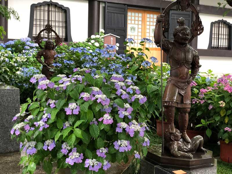 紫陽花と不動明王