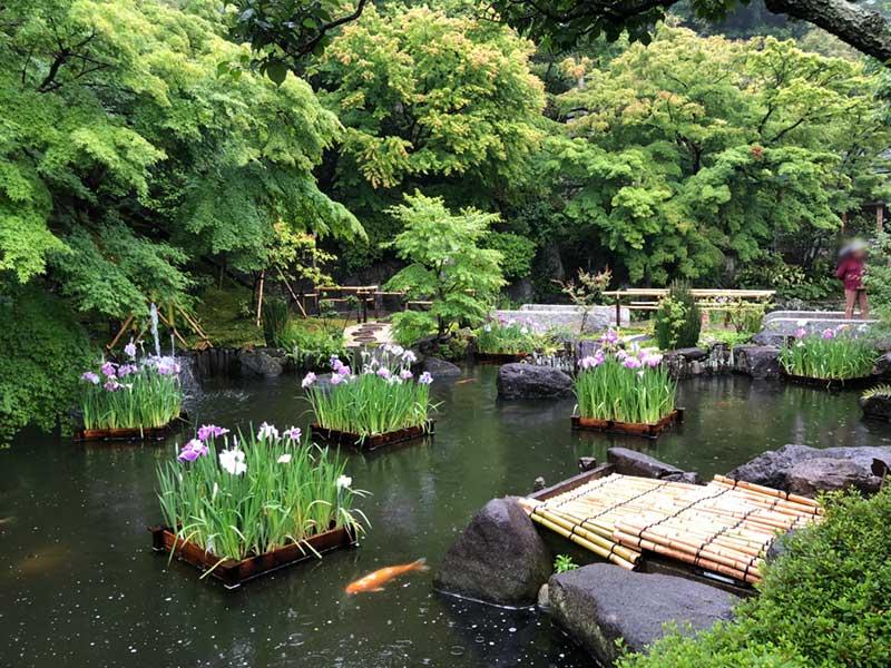 池に咲く花菖蒲も綺麗
