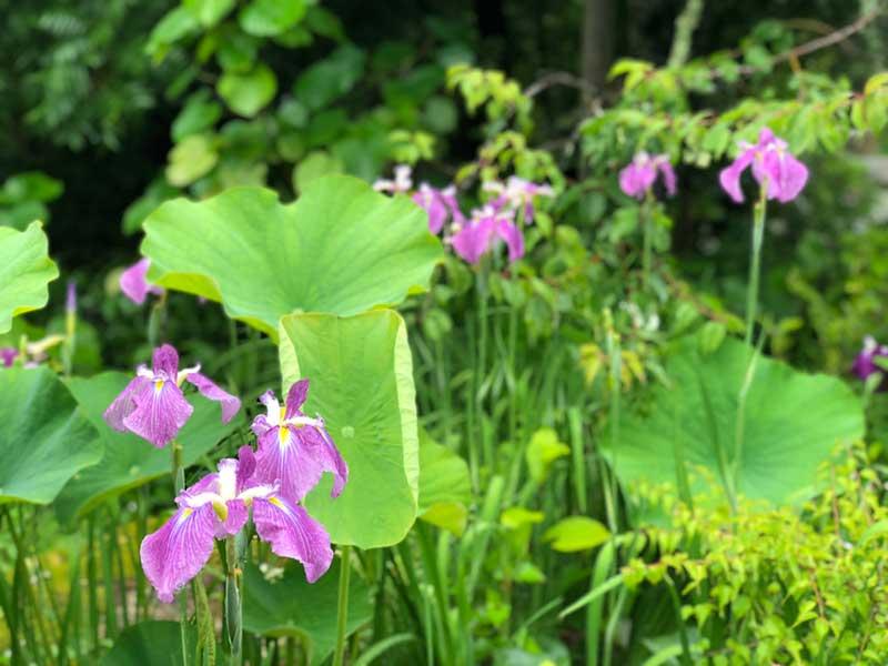 緑に映える紫色