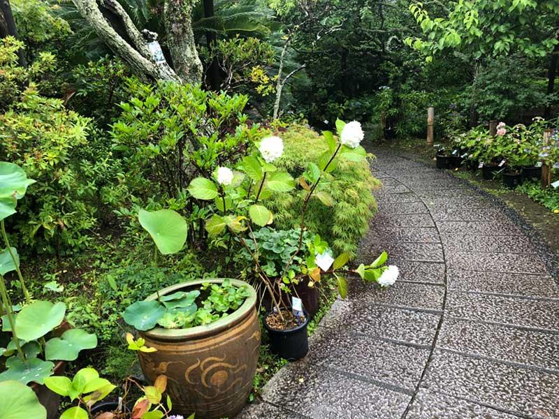 たくさんの花の鉢が配置されている