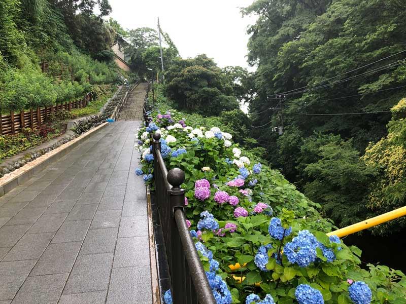 石階段の参道に紫陽花が
