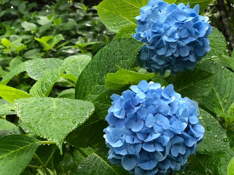 青々と咲いている場所を発見!