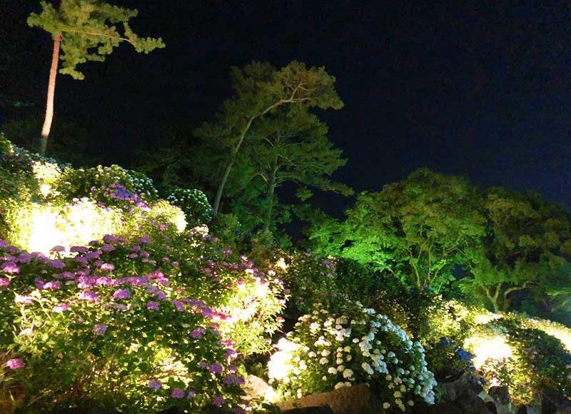 【小田原城あじさい祭り】夜のライトアップ綺麗だけど足元危険!インスタ映えは昼がオススメ?