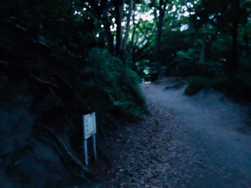 切通しを登った先も山道が続く