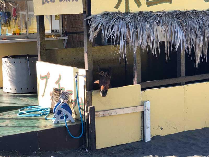 鵠沼海岸ポニーの家!仔馬が大人気