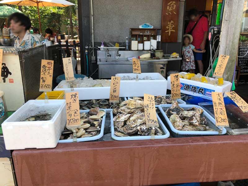 貝などを見ながら