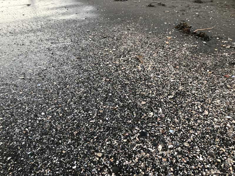 足元は貝殻や海草などの漂流物がいっぱいの浜