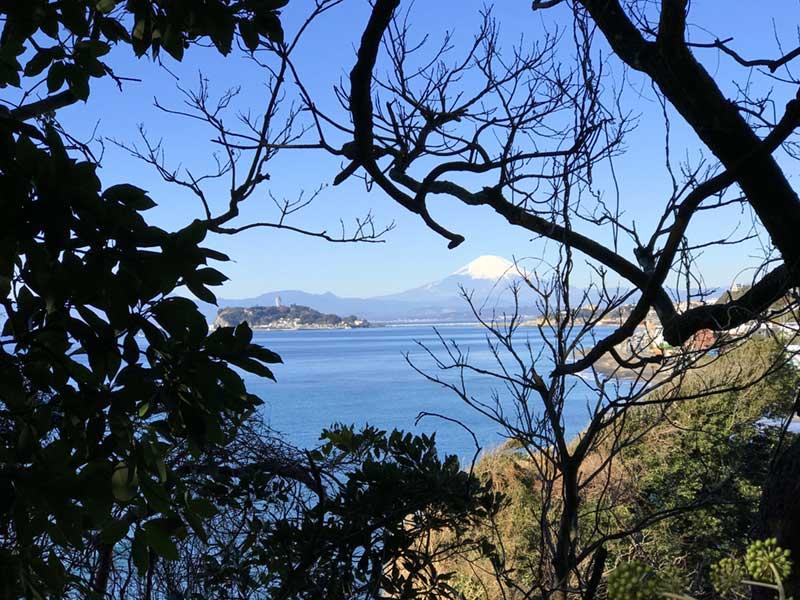 中腹の木々の間から見た富士山と江ノ島