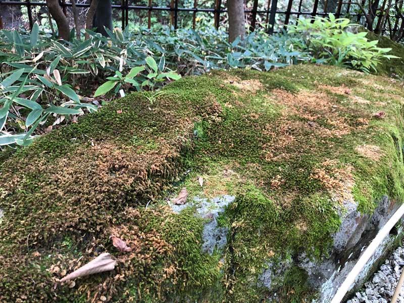 熊笹と苔のわび