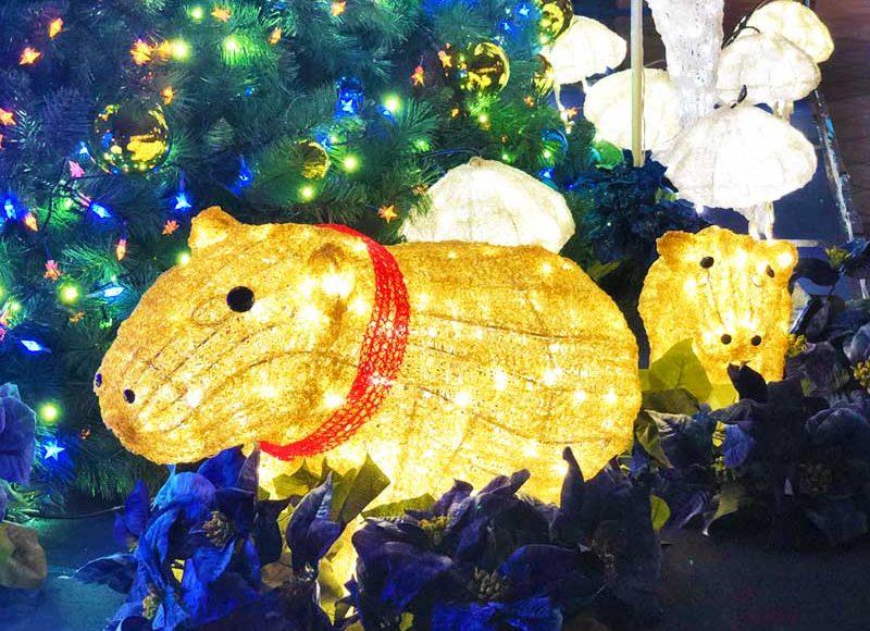 【新江ノ島水族館アクアツリー2018冬】カピバラ・カワウソがライトアップ!閉館後のデート&写真スポットをお見逃しなく!