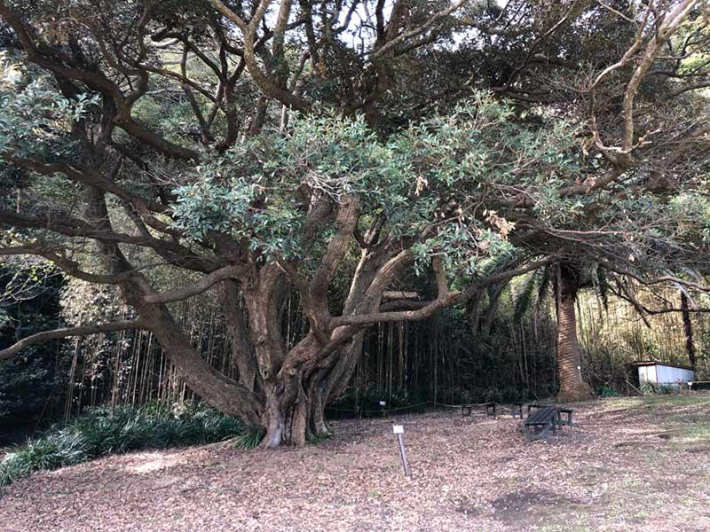 大きな木の下のベンチ