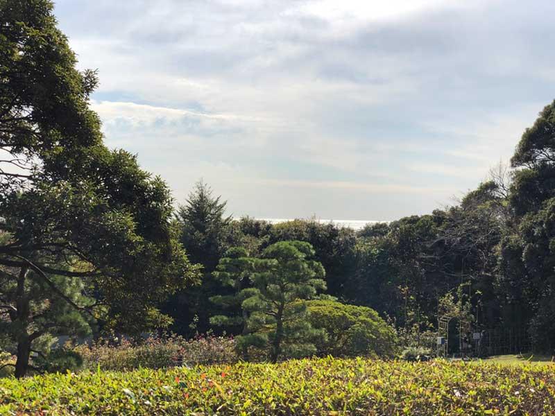 鎌倉の海が見えます