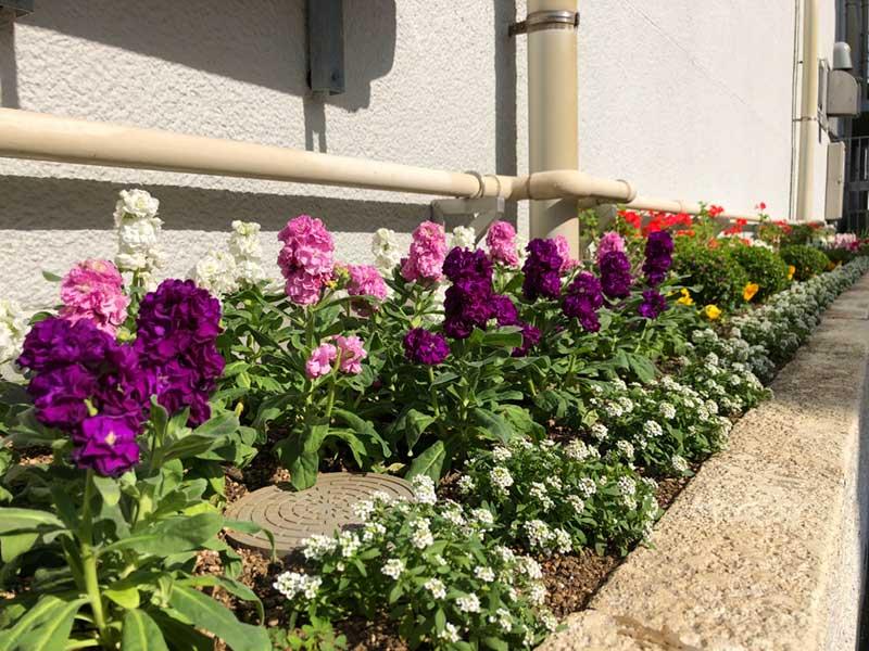 道沿いの花は満開