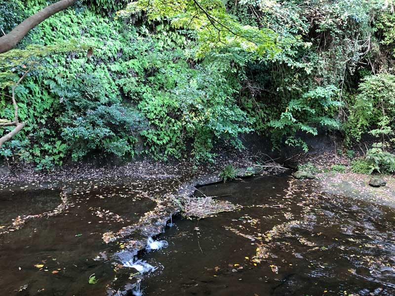 かふぇ揚梅亭のすぐそばを流れる滑川
