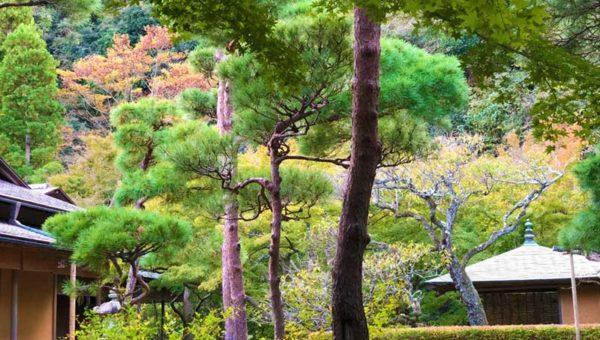 【鎌倉紅葉2018年11月上旬最新情報】今の状況は?まだ緑が多い!見ごろはまだまだ先。