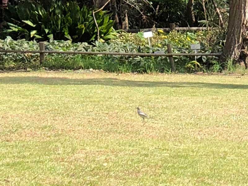 小鳥もくつろげる庭園