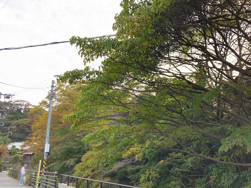 街の木々もまだ緑が多い