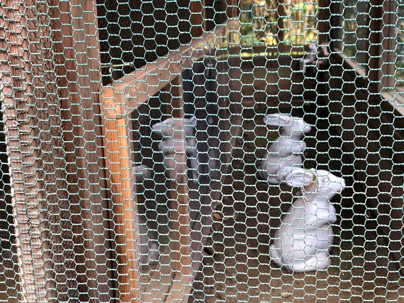 本物とそっくりなウサギ像