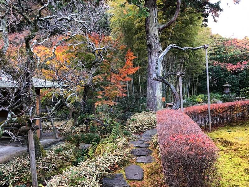 回遊式の庭園を散策