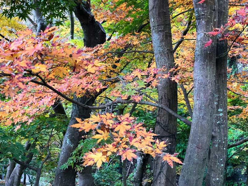 この辺りは今が紅葉の最盛